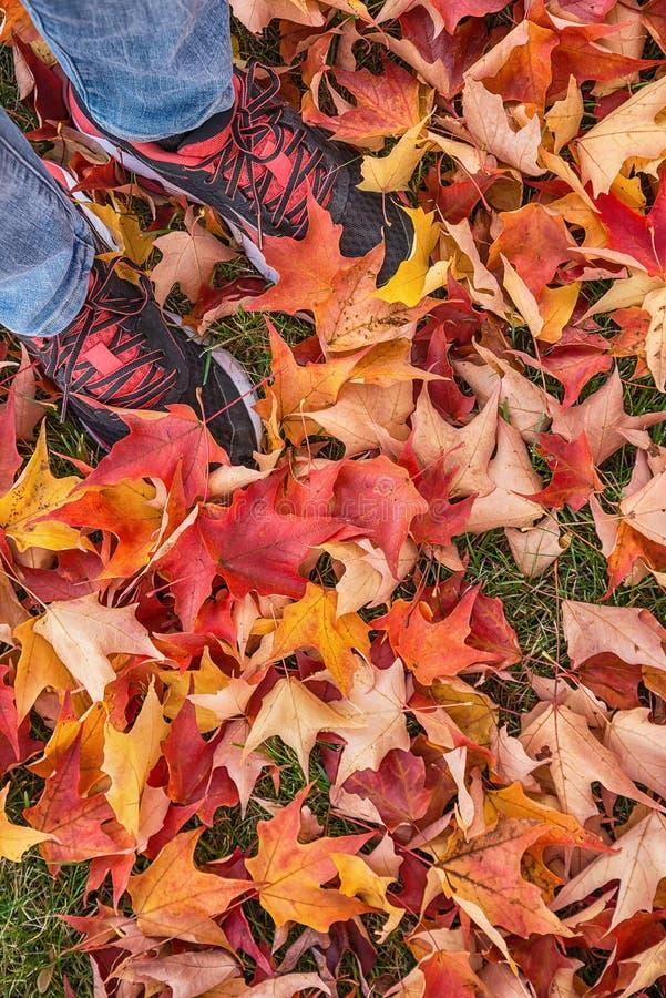 Pies en las zapatillas de deporte que se colocan en las hojas de otoño imagenes de archivo