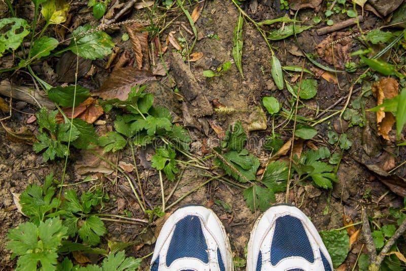 Pies femeninos en zapatos azules del deporte en la tierra con la hierba foto de archivo libre de regalías