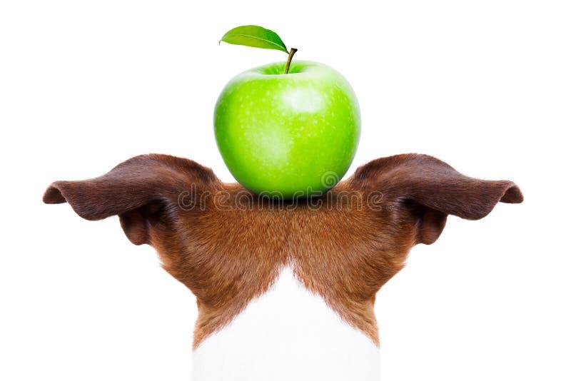 Pies i jabłko fotografia royalty free