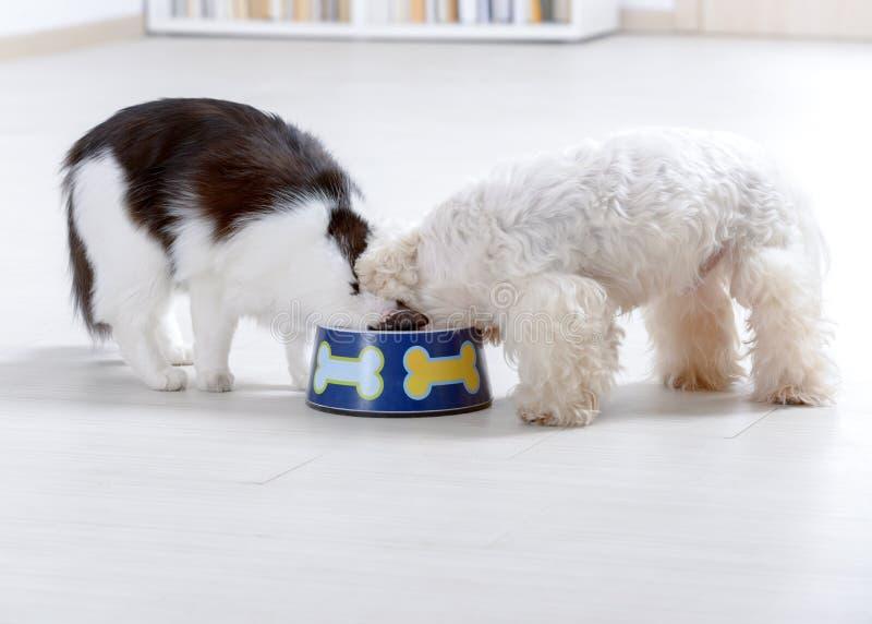 Pies i kot łasowanie od pucharu fotografia royalty free