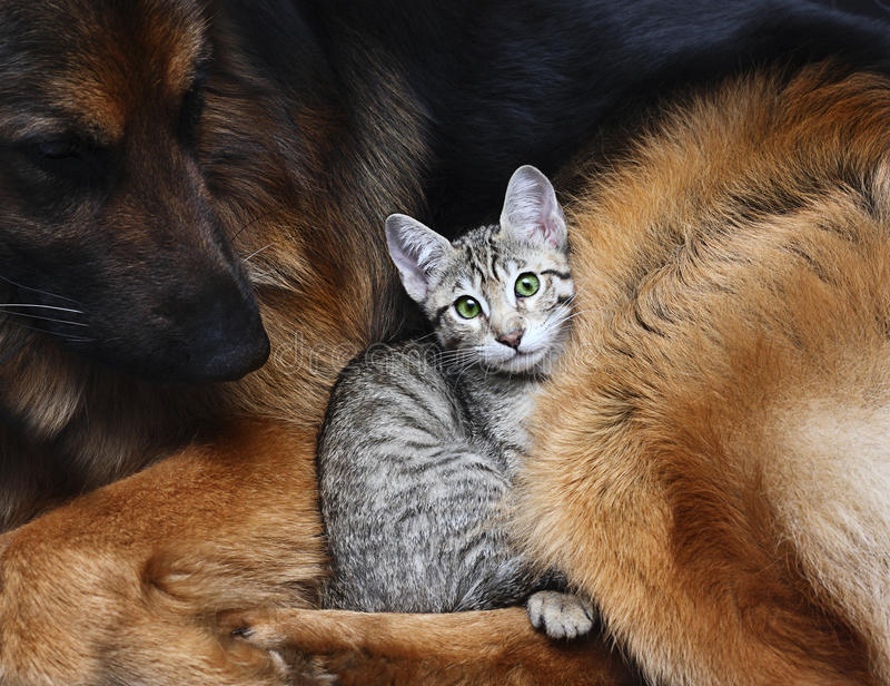 Pies i kot. obraz stock