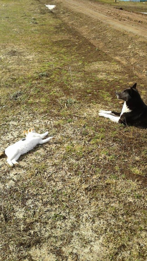 Pies i kot fotografia stock