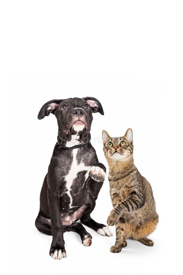 Pies I Kot dźwigania łapy i Przyglądający Up Wpólnie fotografia stock