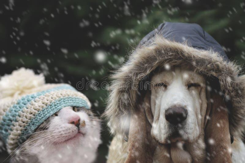 Pies i kot kapelusz w opadzie śniegu obraz royalty free