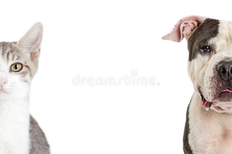 Pies I Kot kopii zbliżenie Cropped przestrzeń zdjęcia stock
