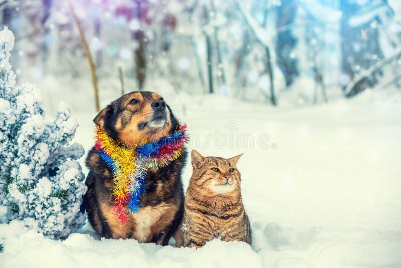 Pies i kot siedzi wpólnie blisko choinki zdjęcia stock