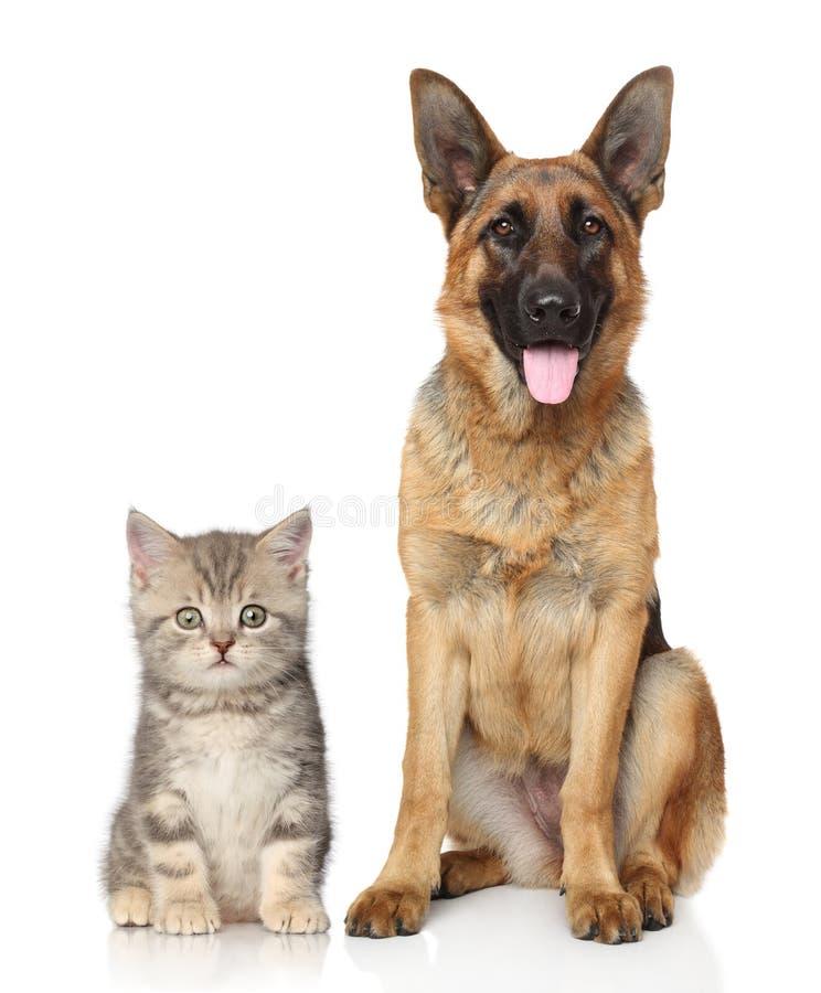 Pies i kot wpólnie zdjęcia royalty free