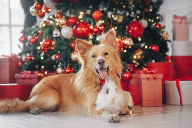 Pies i królik na bożego narodzenia tle obrazy stock
