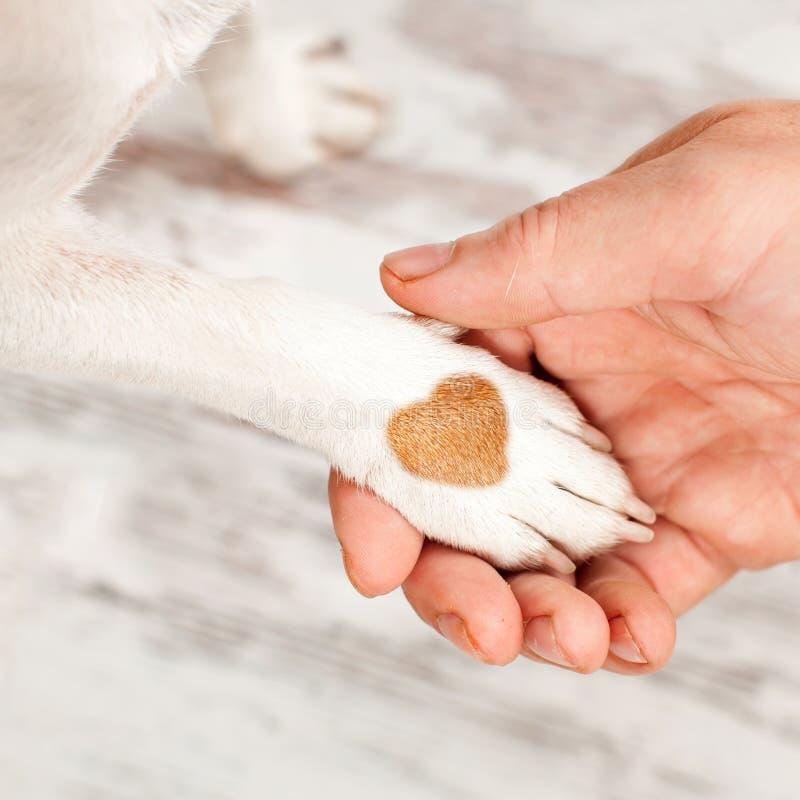Pies i ludzie miłość zdjęcie royalty free
