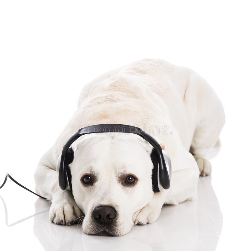 Pies i muzyka fotografia royalty free
