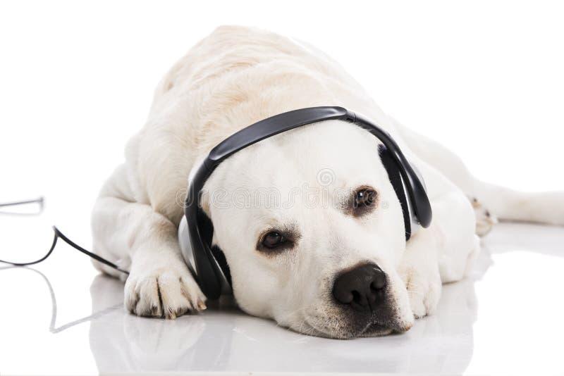 Pies i muzyka zdjęcie stock
