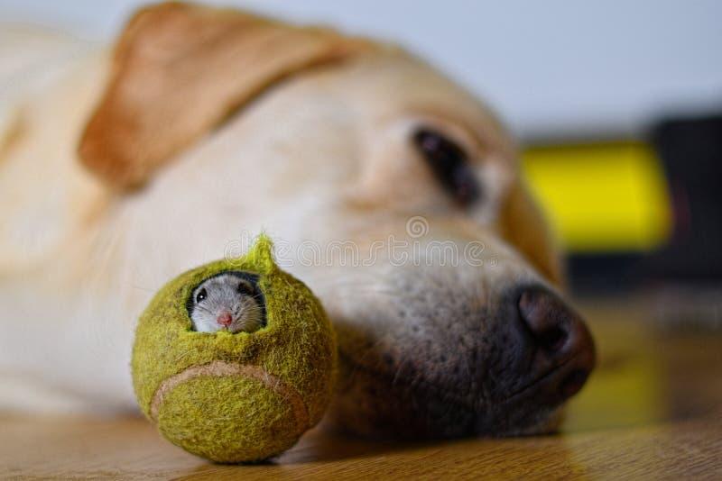 Pies i mysz obrazy stock