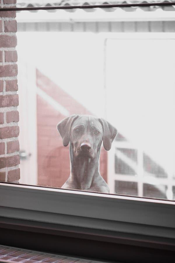 Pies i okno zdjęcia royalty free