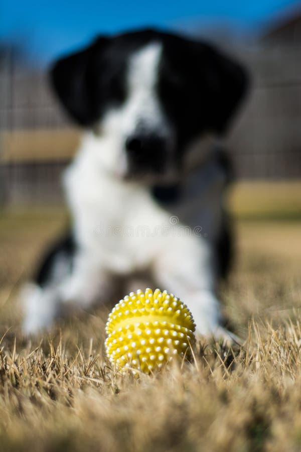 Pies i piłka fotografia stock