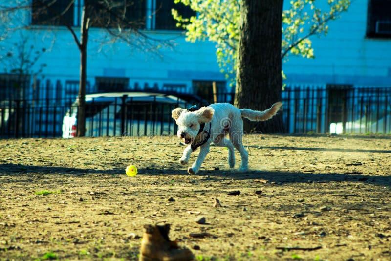 Pies i piłka fotografia royalty free