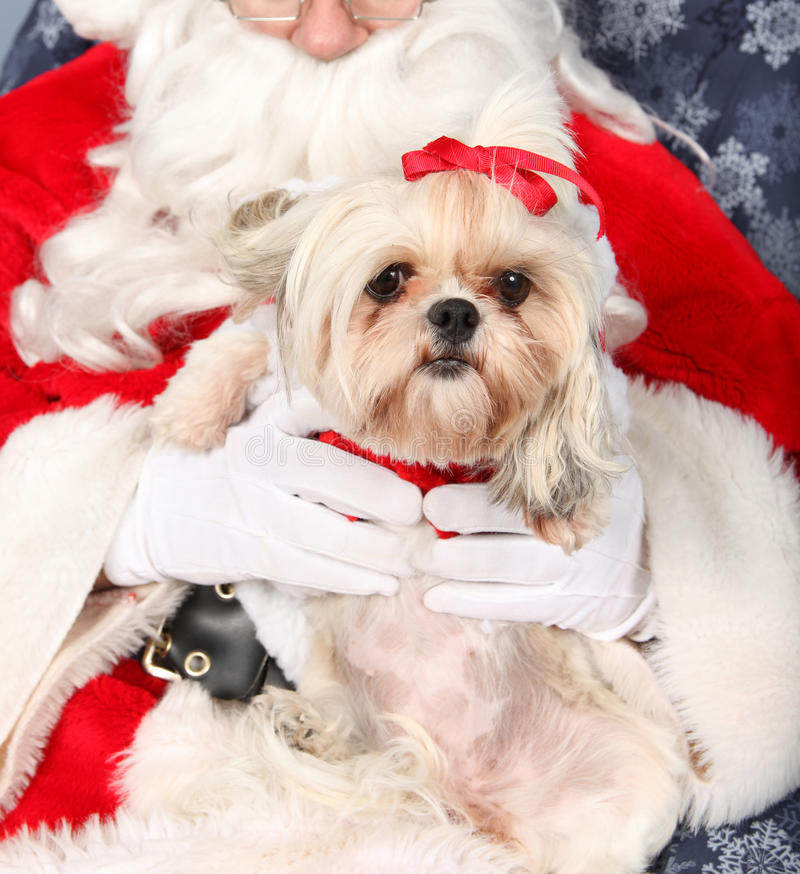 Pies i Santa obraz stock