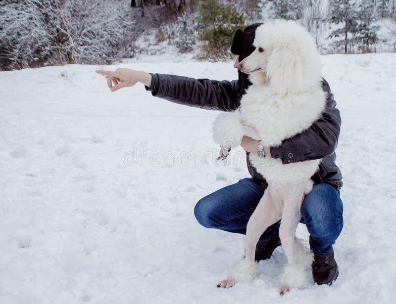 Pies i swój właściciel patrzeje w odległość w zimie zdjęcia stock