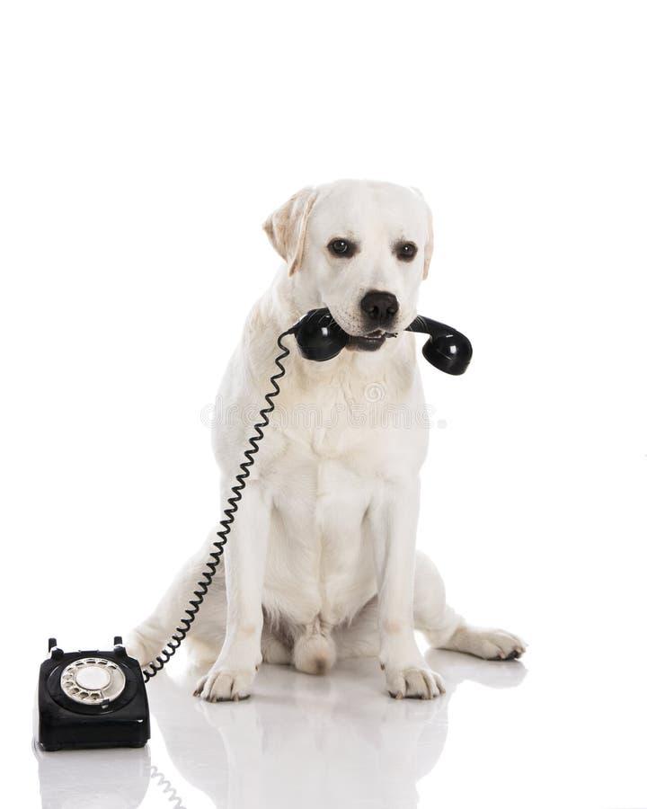 Pies i telefon obrazy royalty free
