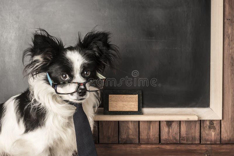 Pies jako nauczyciel z szkłami i krawatem obraz royalty free