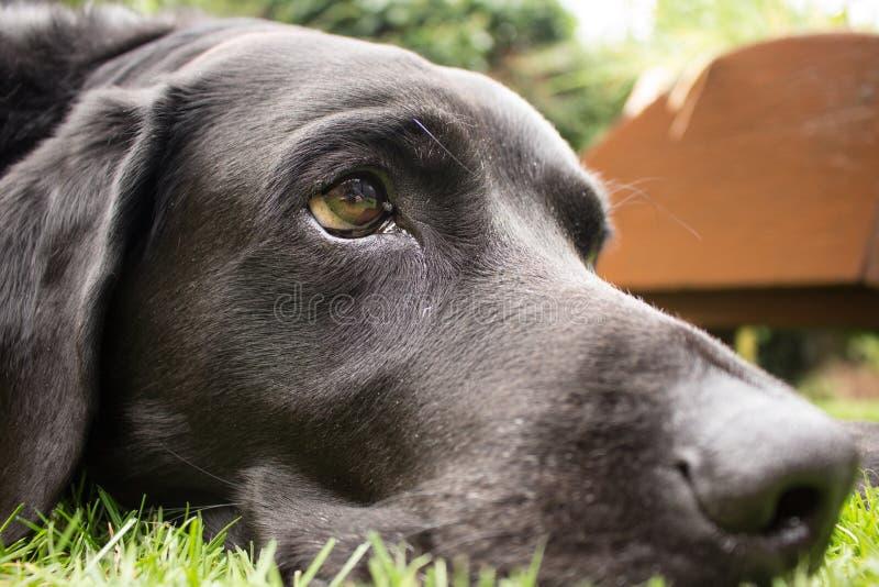 pies jest życie obrazy stock
