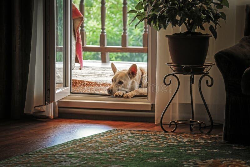 Pies jest blisko drzwi obraz royalty free