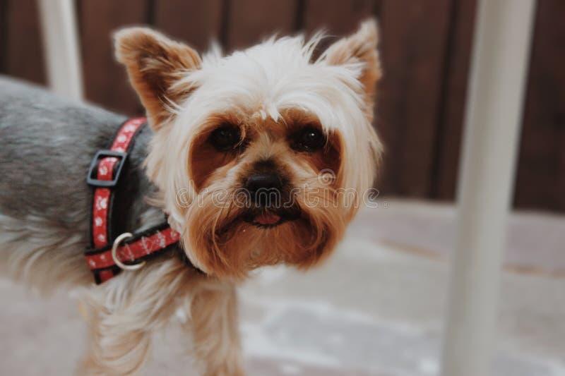 pies jest portret obraz stock
