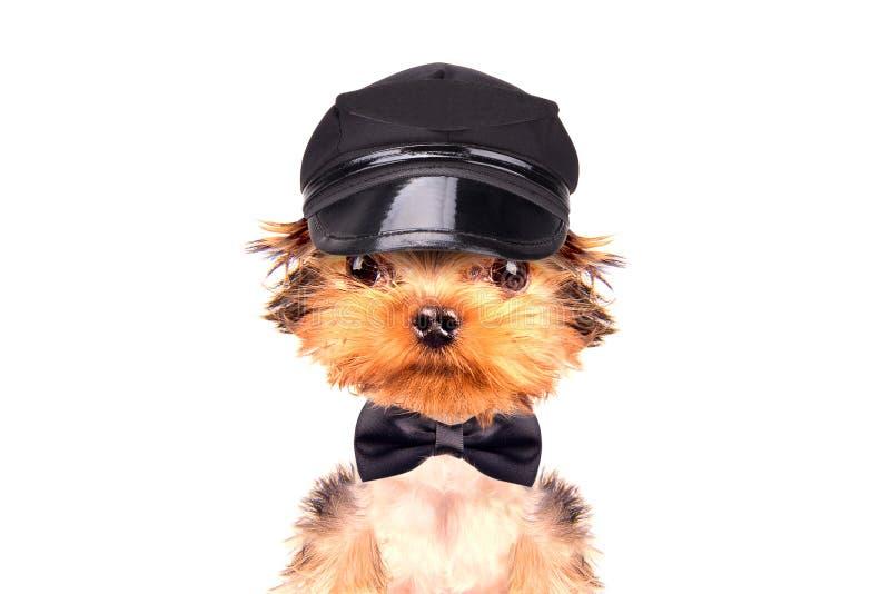 Pies jest ubranym nakrętkę i szyja my kłaniamy się zdjęcie royalty free