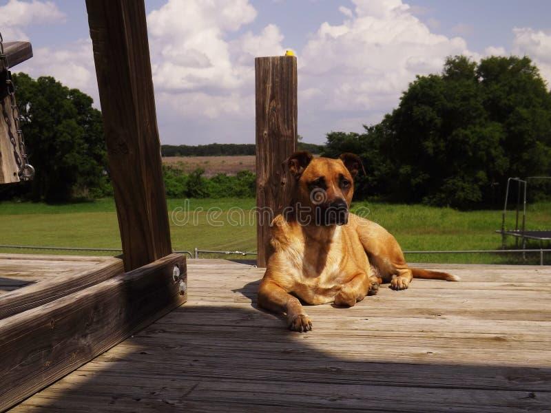 pies jest zmęczony fotografia stock