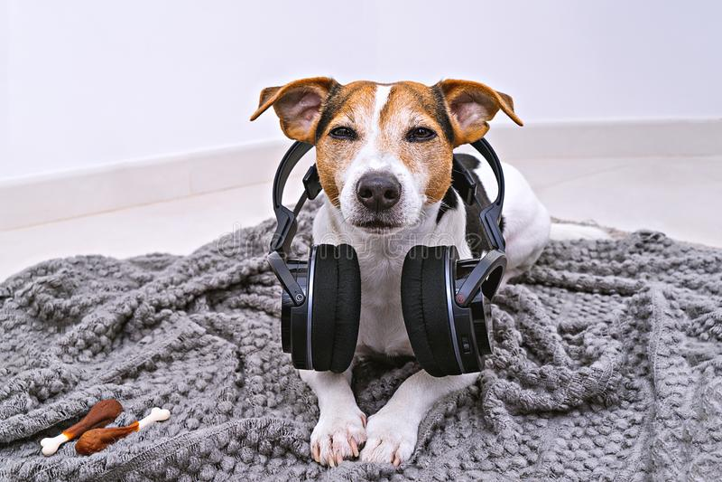 Pies kłama w bezprzewodowych hełmofonach na koc zdjęcia stock