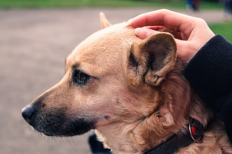 pies klepie rękę właściciel makro- zdjęcia stock