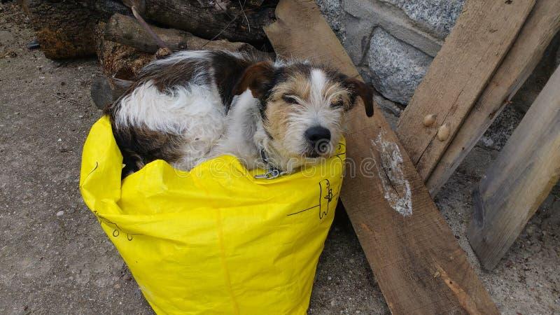 Pies lubi spać w torbie fotografia royalty free