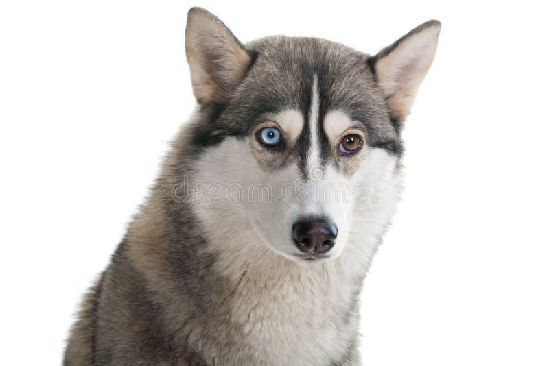 Pies na biały tle. obrazy royalty free