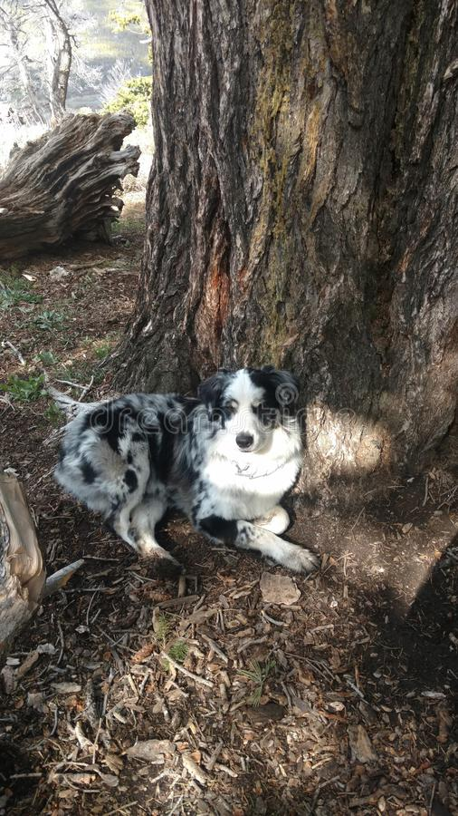 Pies na drzewie zdjęcie royalty free