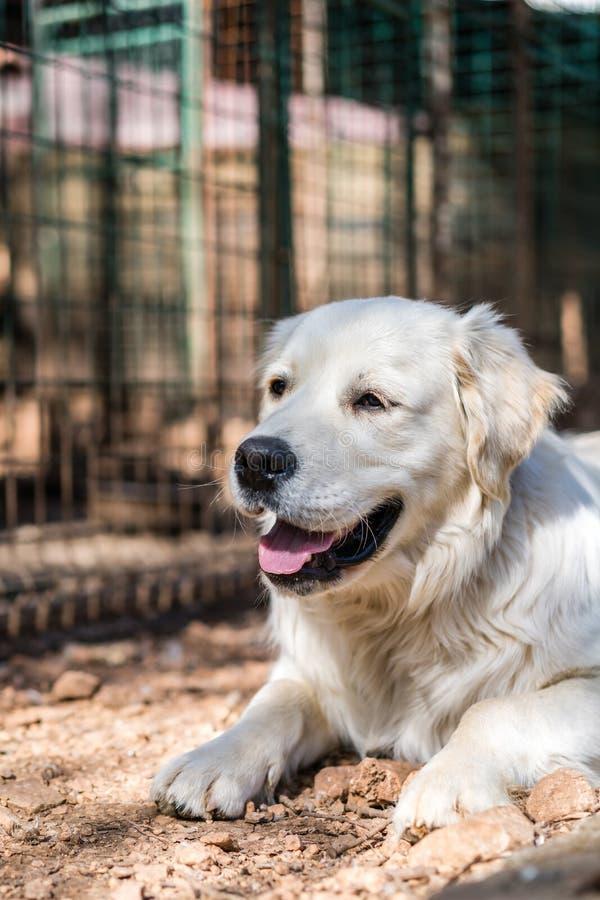 Pies na gospodarstwie rolnym obrazy stock