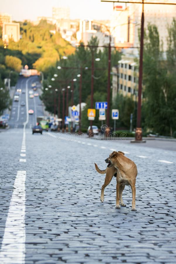 Pies na jezdni zdjęcie royalty free