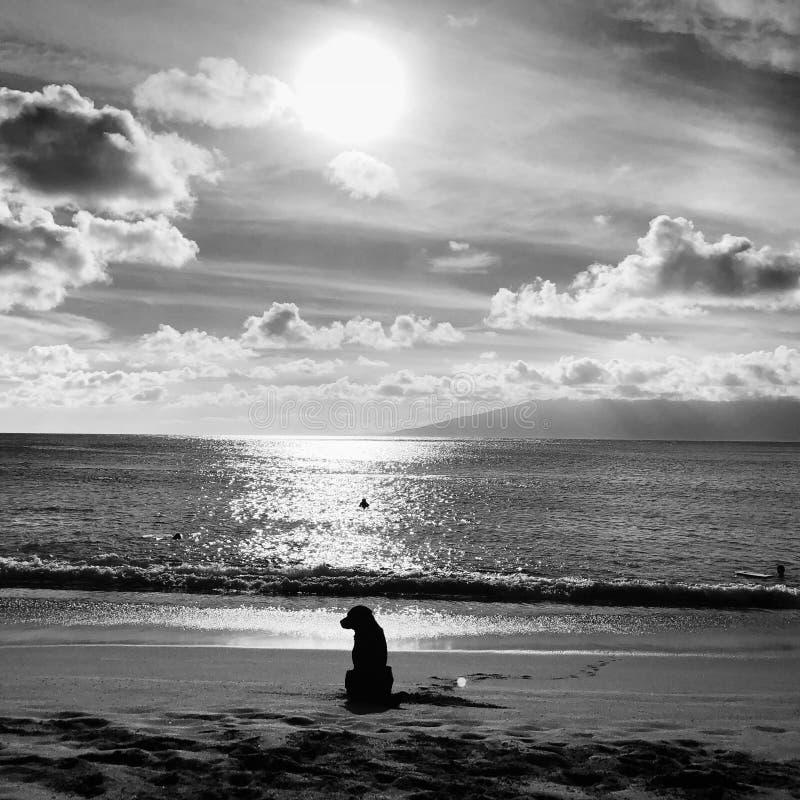 Pies na Napili plaży w Maui obraz royalty free