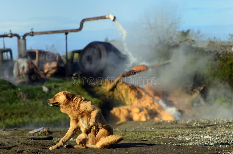 Pies na odpoczynku przy termiczną wiosną obrazy stock
