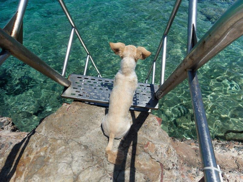 Pies na plaży blisko schodków prowadzi morze fotografia royalty free