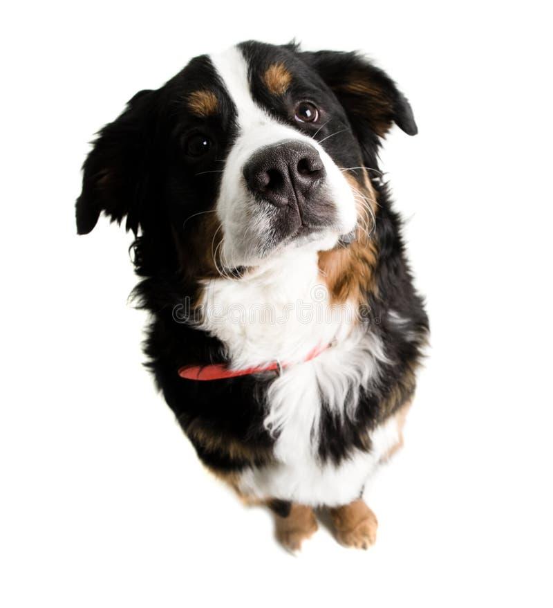 pies na posiedzenie. zdjęcia stock