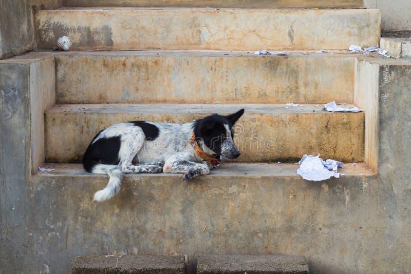Pies na schodku zdjęcia stock