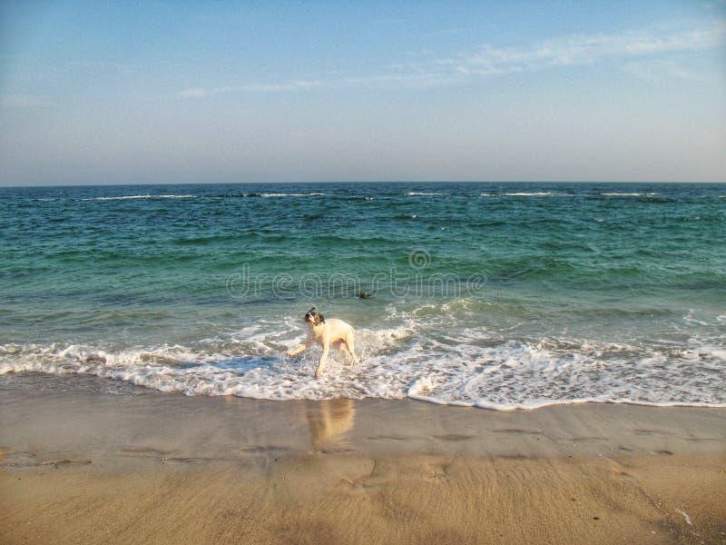 Pies na seashore obraz stock