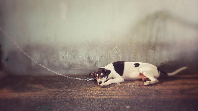 Pies na smyczu fotografia royalty free