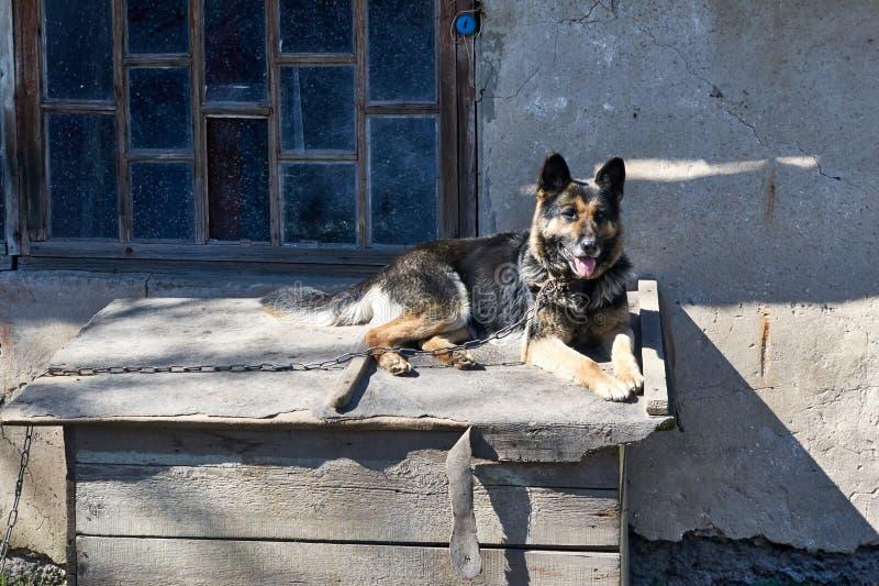 Pies na smyczu kłama na wierzchołku budka fotografia royalty free