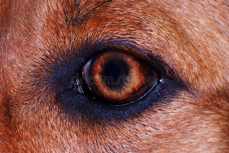 pies oka makro zdjęcie royalty free