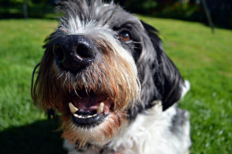 Pies ono Uśmiecha się Przy kamerą obraz royalty free