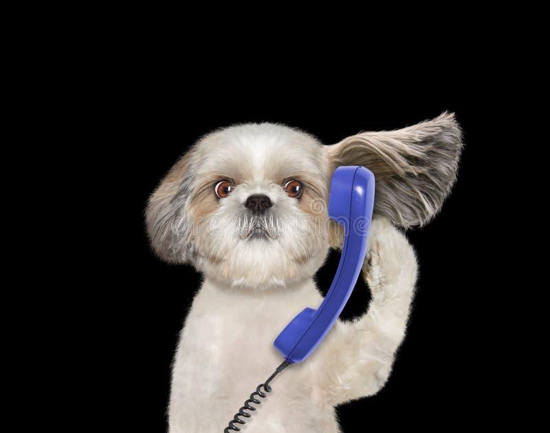 Pies opowiada nad starym telefonem obrazy stock