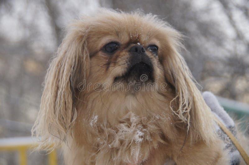 Pies patrzeje w odległość obrazy royalty free