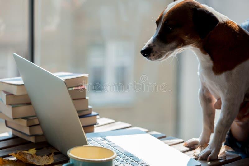 Pies patrzeje wewnątrz laptop na stole zdjęcie stock