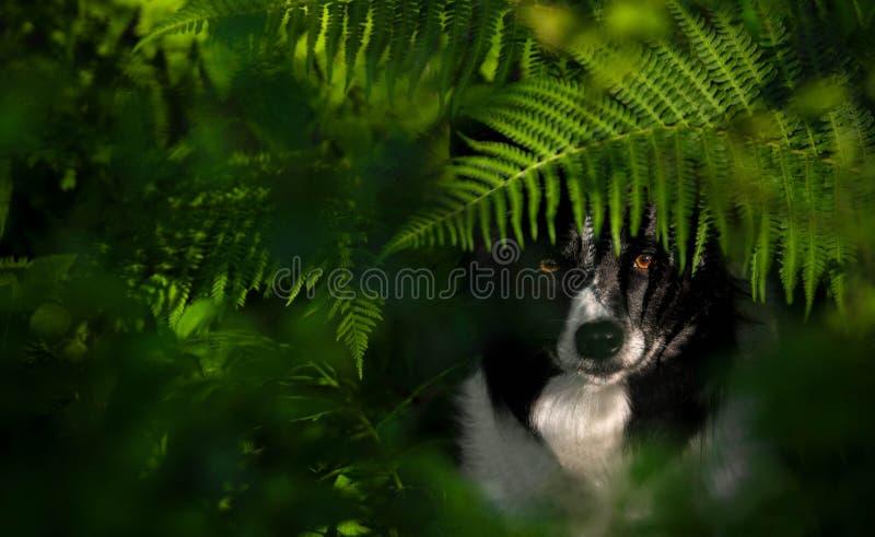Pies pod paprociami zdjęcia stock
