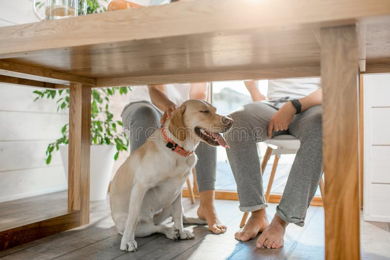 Pies pod stołem w domu zdjęcia royalty free